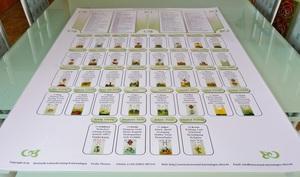 """Lenormand Häuser Schablone Häusertafel als große Tischtafel (Poster Format DIN A1) """"große Tafel"""" 4 x 8 mit den Lenormandkarten Abbildung Häusersystem Vorlage und Deutung der 36 Häuser"""